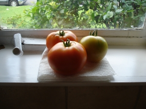 Tomatoes Ripening in Window
