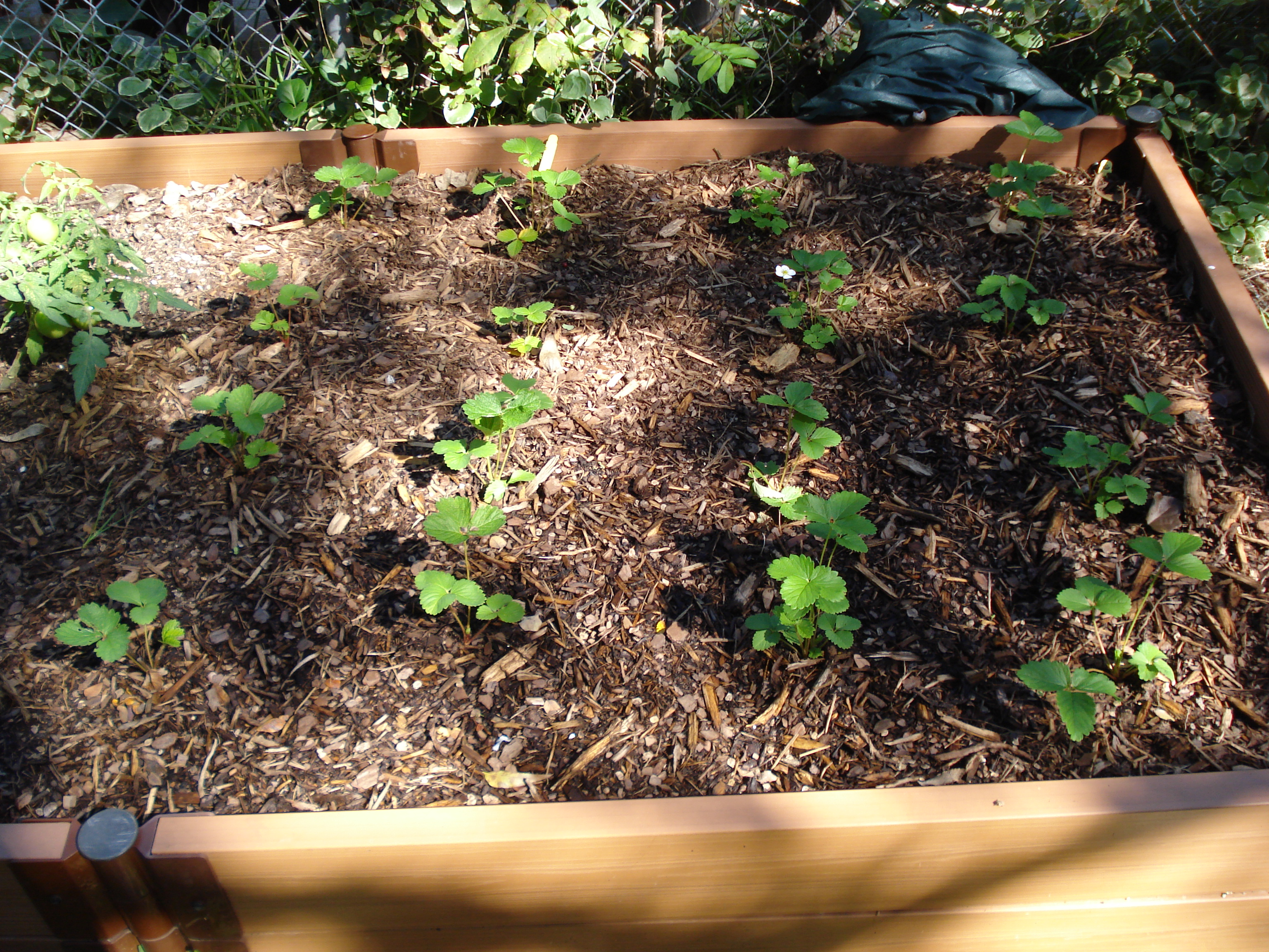 10 great reasons to plant a vegetable garden in 2010 austin