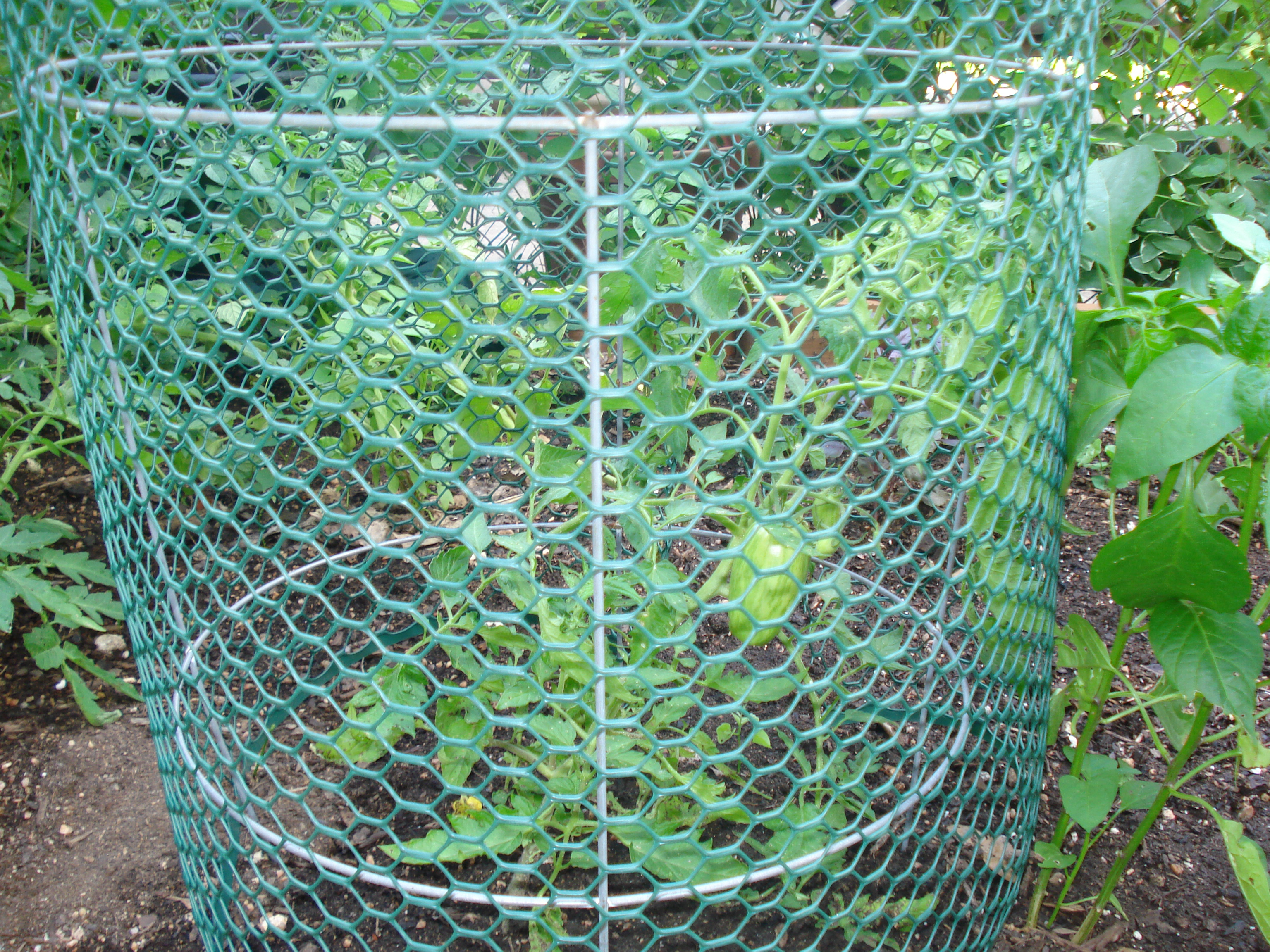 how to build a squirrel proof tomato cage