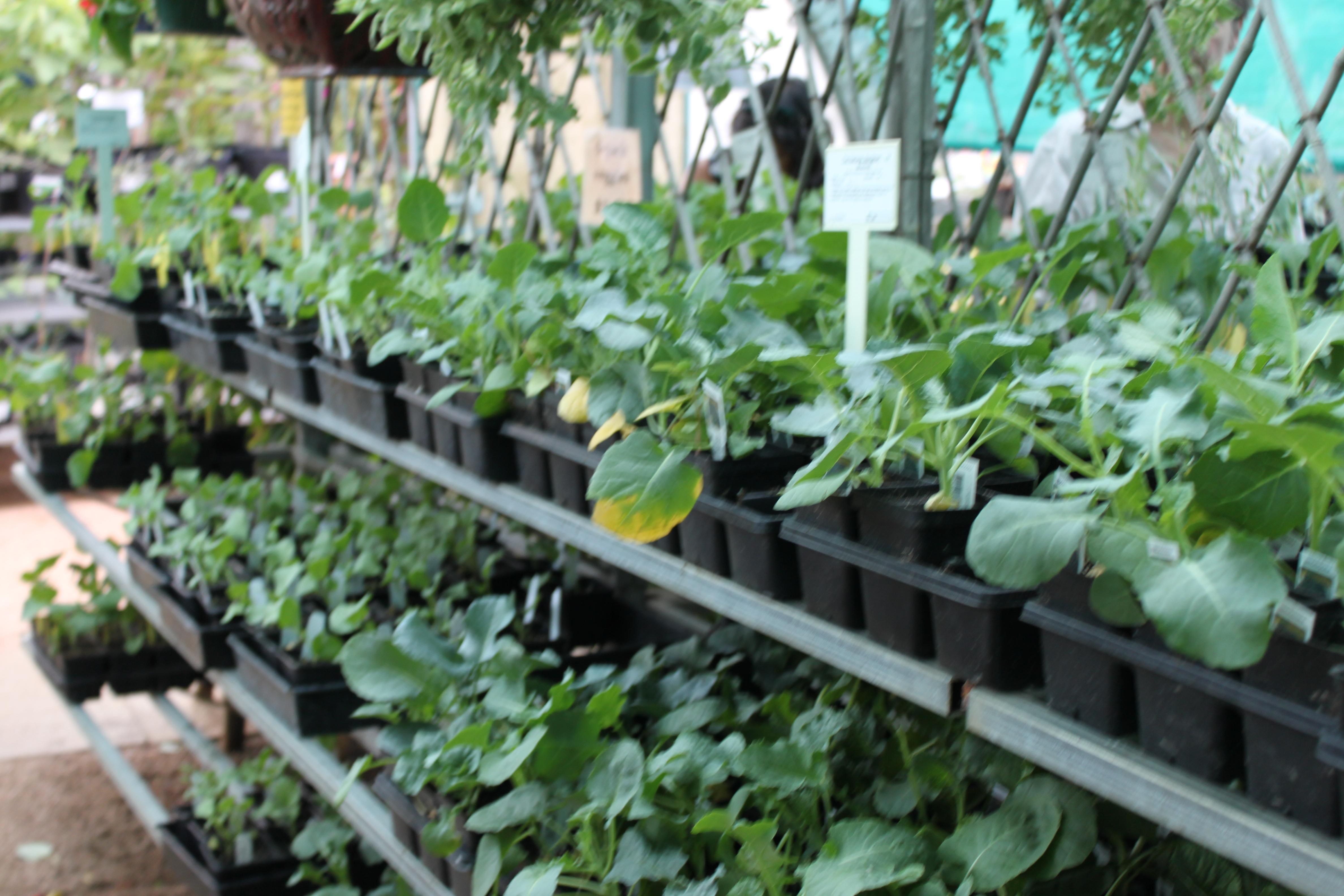 Captivating Fall Vegetable Transplants