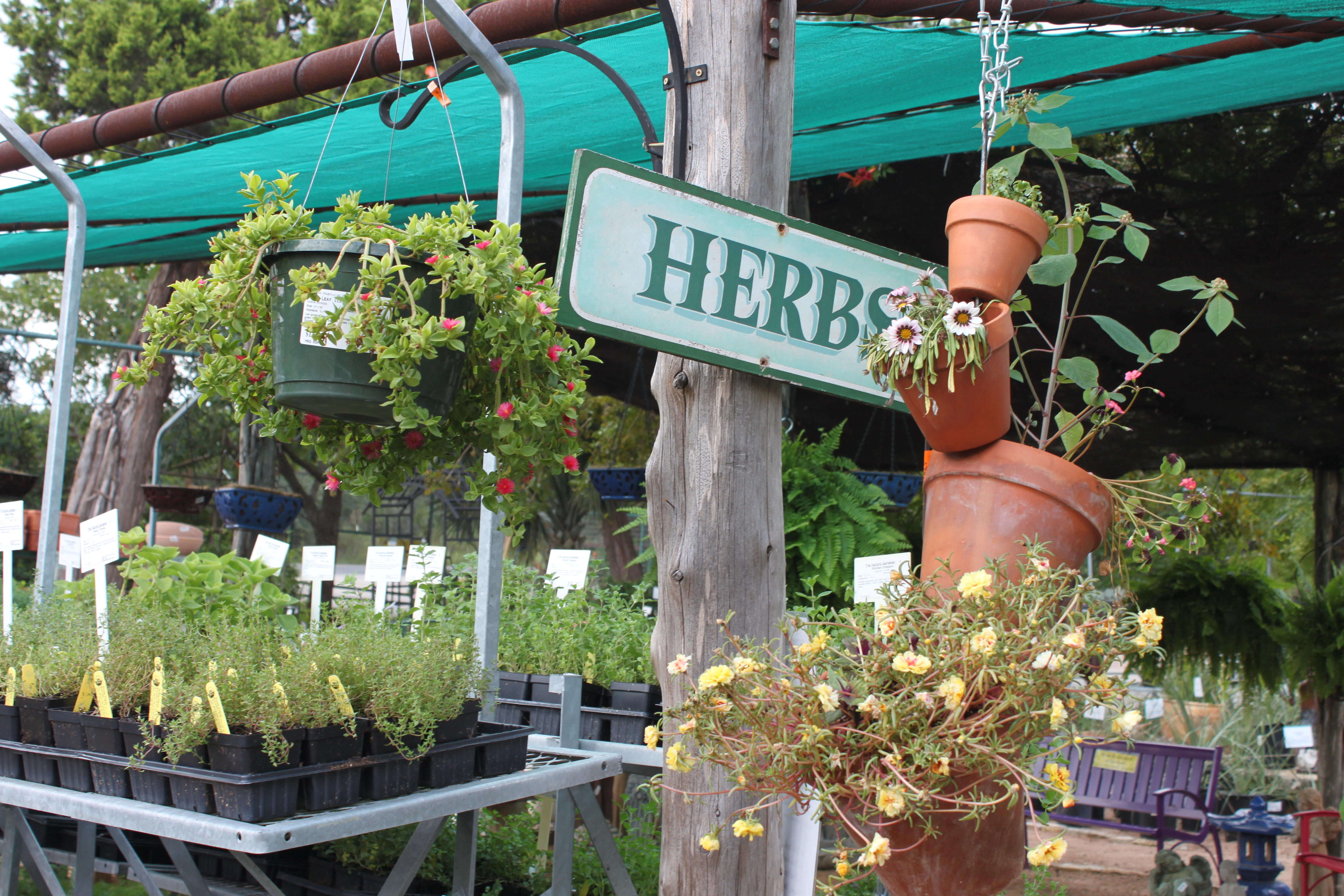 Fall Vegetable And Herb Transplants The Natural Gardener Austin Urban Gardens