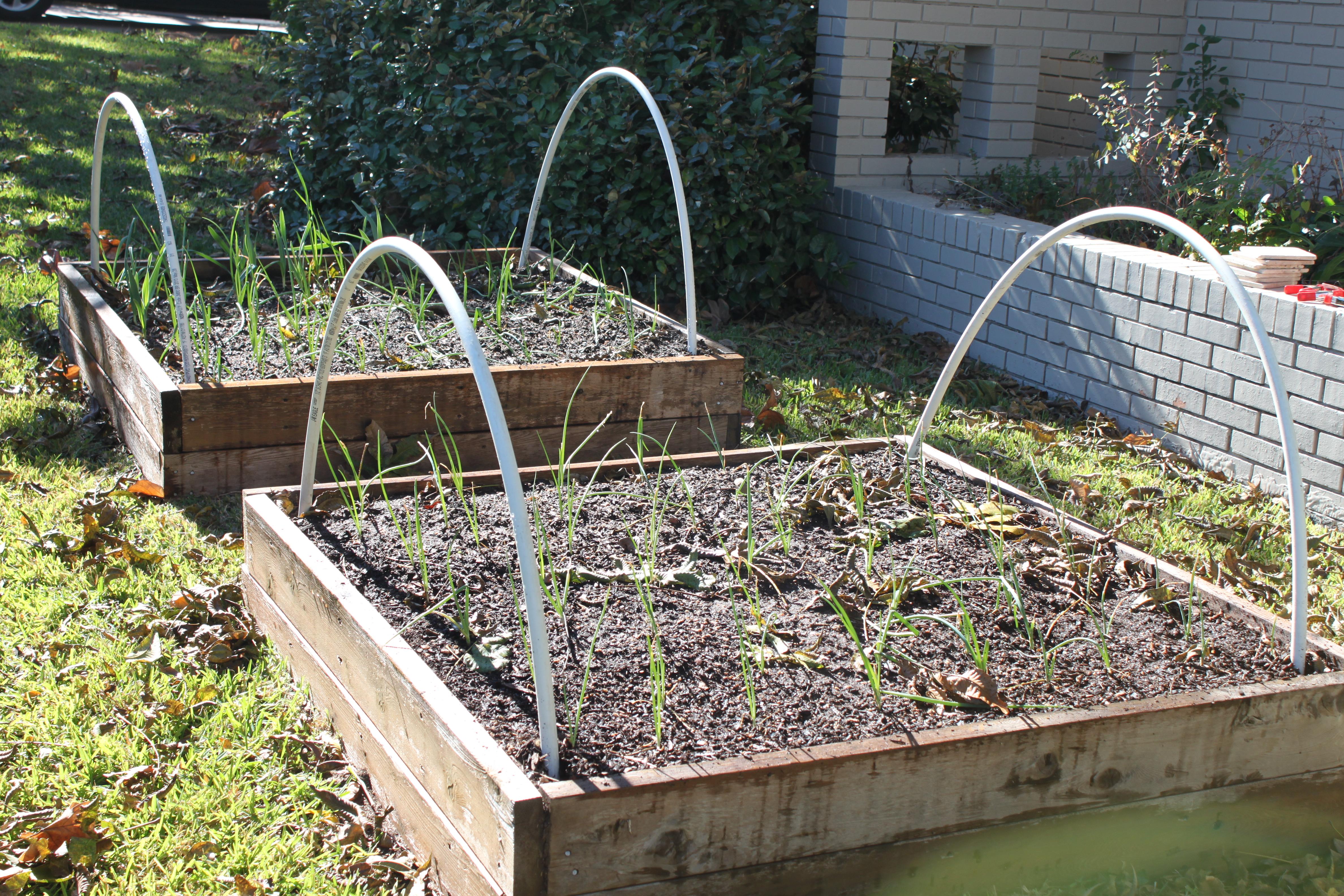 pvc hoops - Garden Row Covers