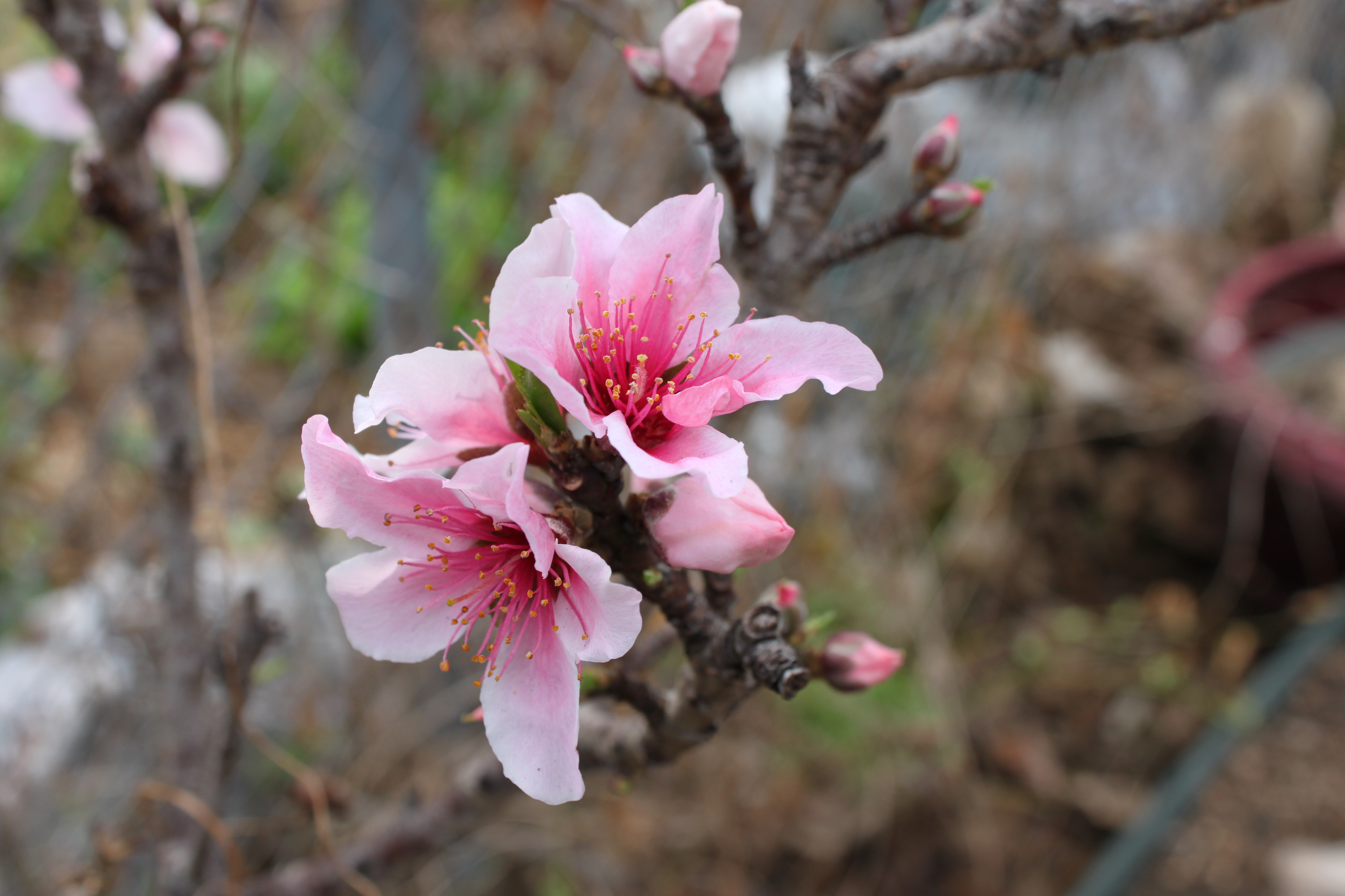the time between winter and spring in an austin urban garden
