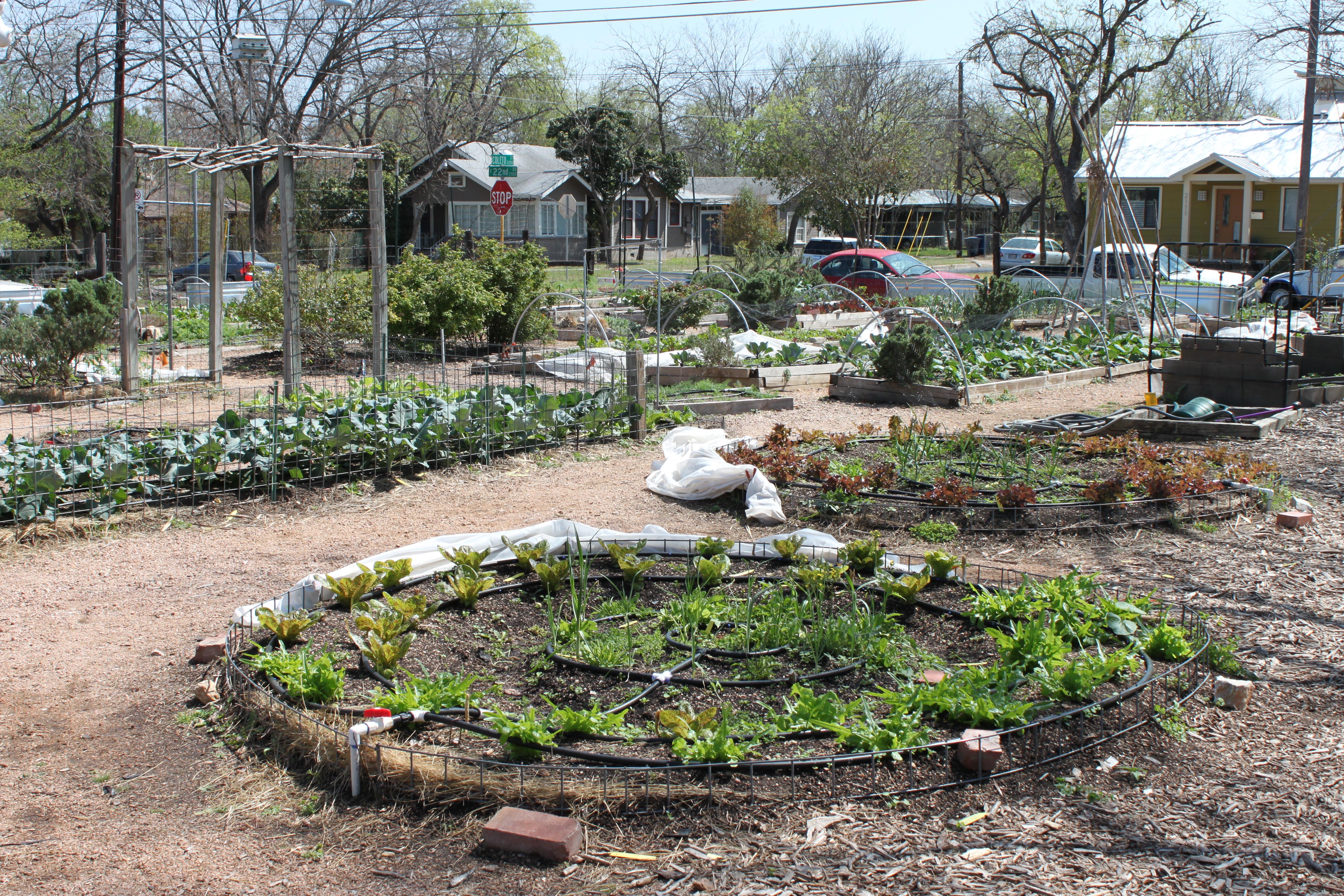 Eastside cafe austin urban gardens for Eastside urban farm and garden