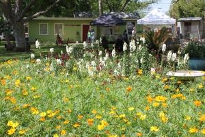 Springdale Flowers
