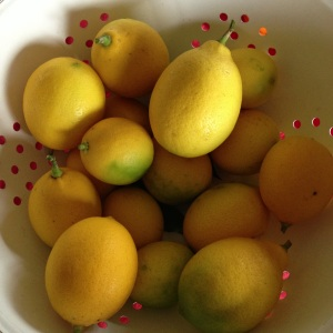 Lemons from my tree