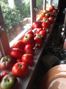 First wave of tomatoes