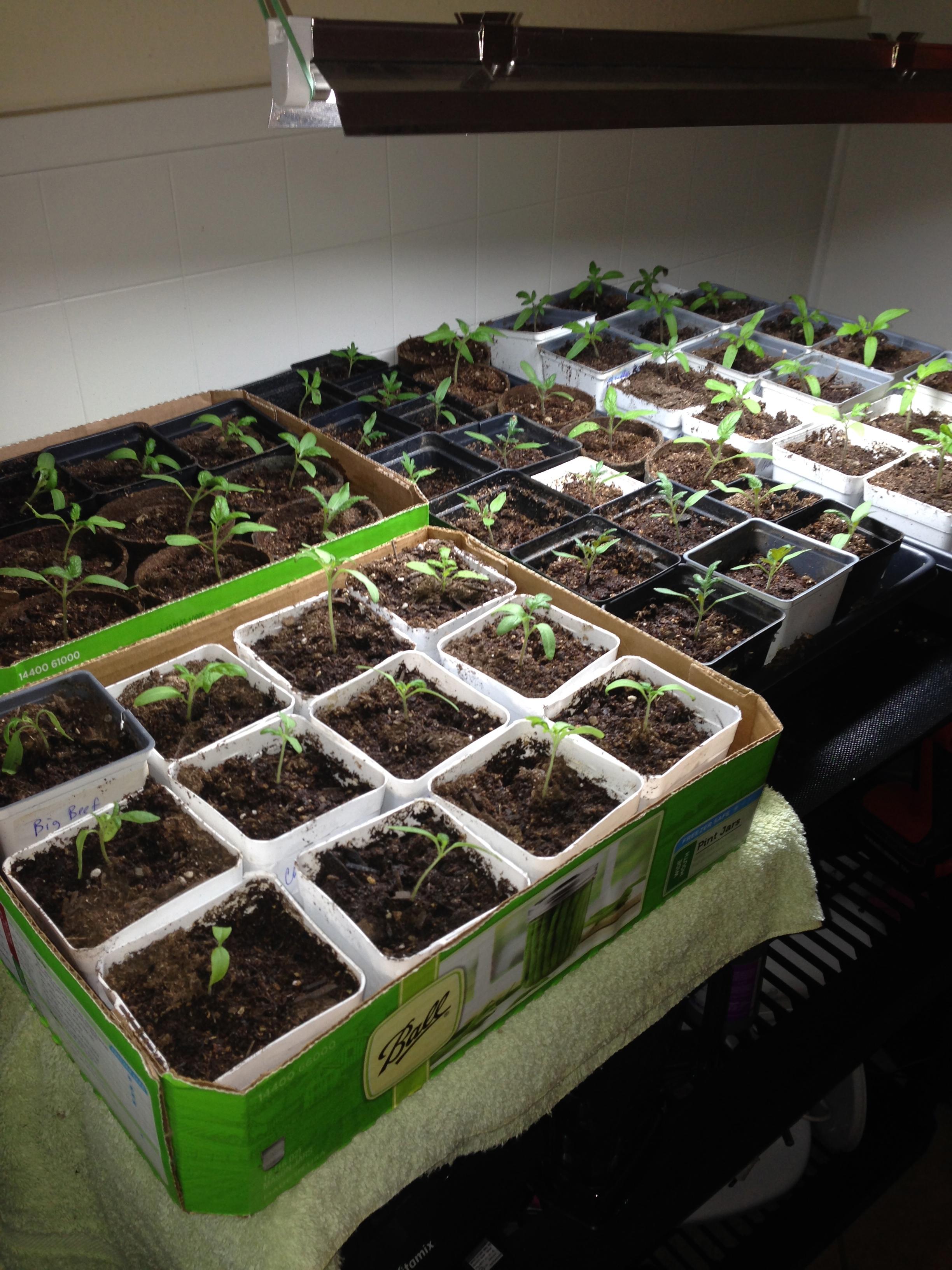 Sunshine Community Garden Plant Sale | Austin Urban Gardens